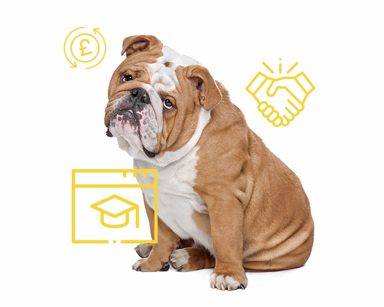 Benefits of working with smart paws