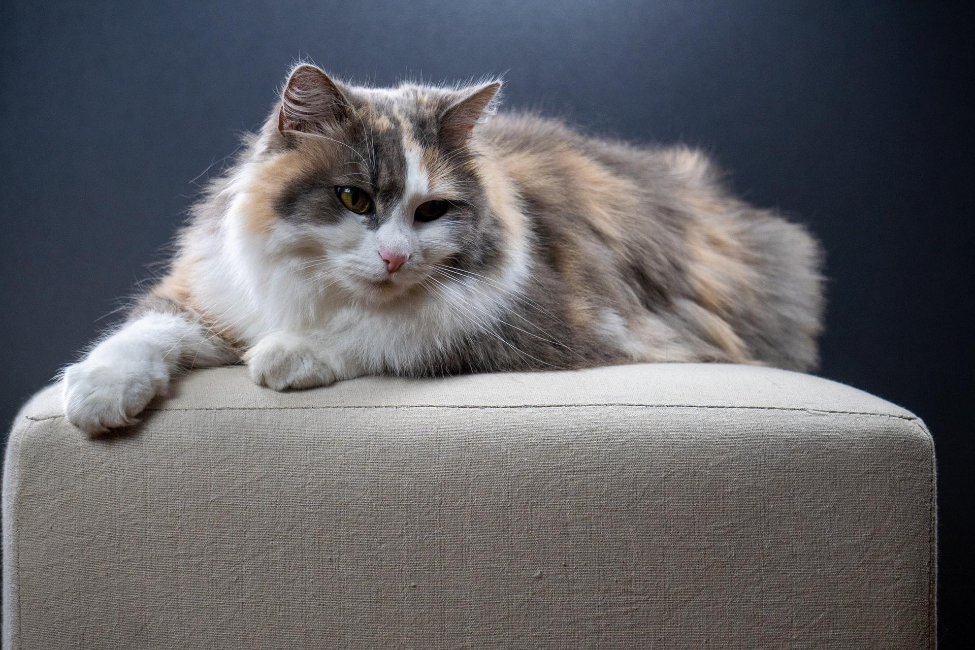 Katzenkratzen – warum Katzen es tun und wie man Schäden in den eigenen vier Wänden verhindert