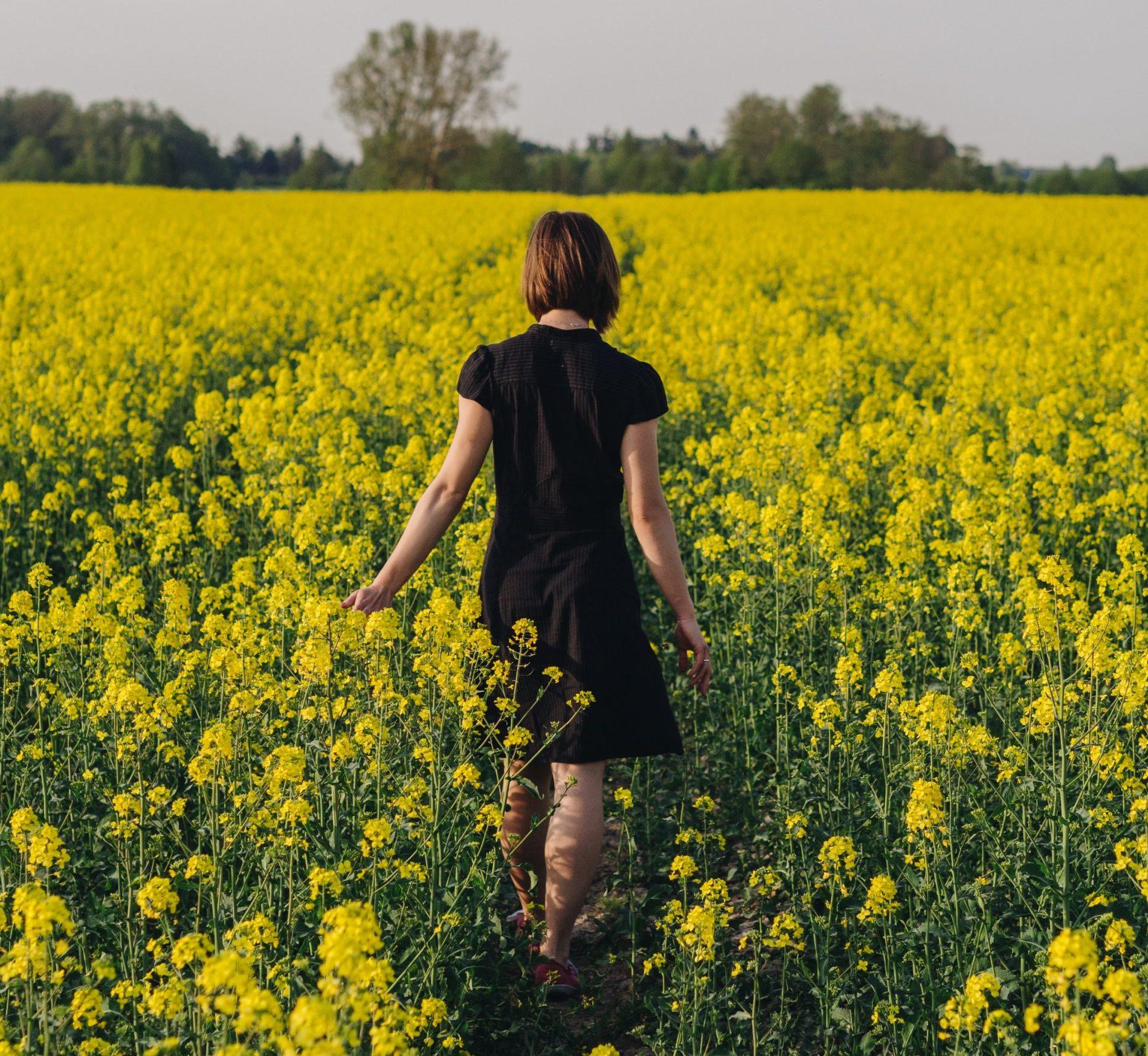 Goldene Felder – hübsch, aber potenziell gefährlich