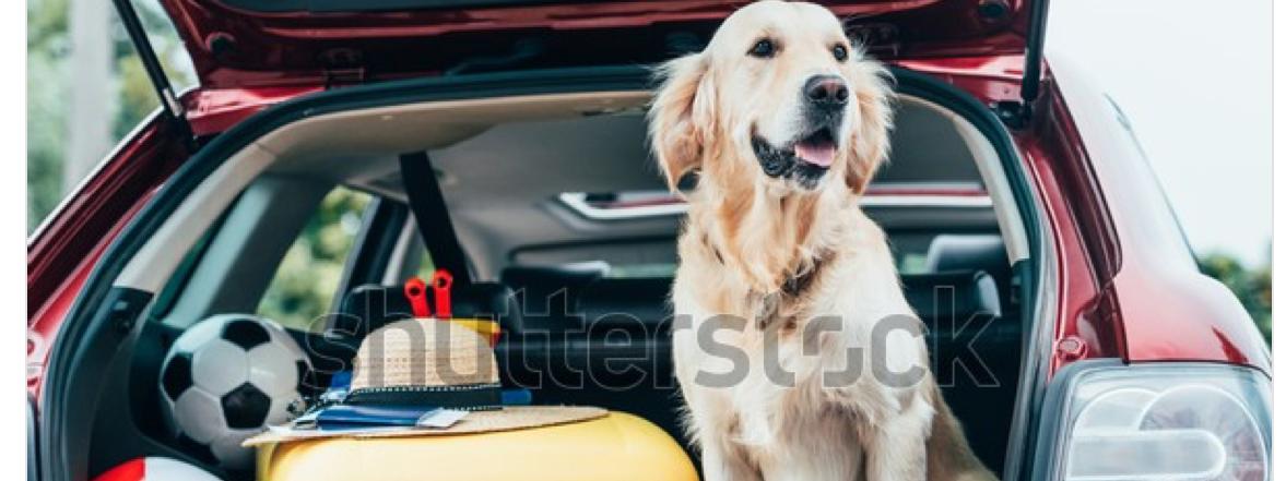 Reisen mit Haustieren